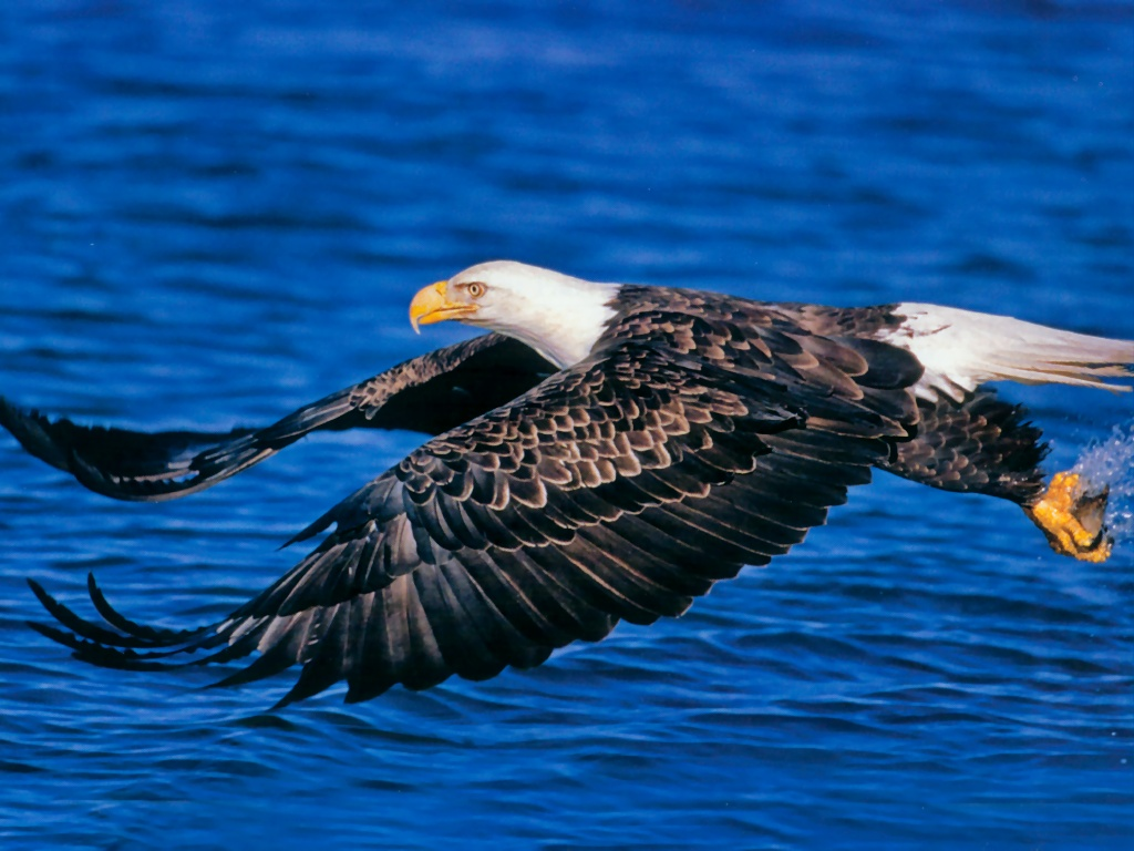 animals in flight wallpaper desk - photo #11
