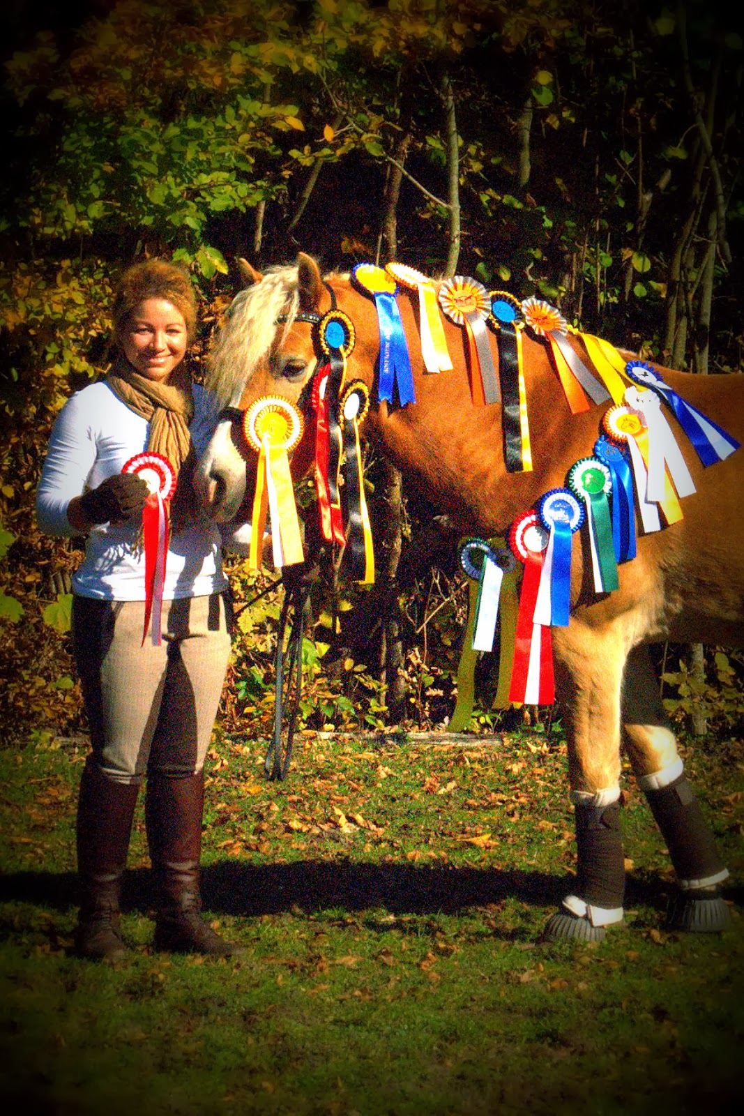 Dressage Hafl: [Throwback Thursday] Last year's ribbons...