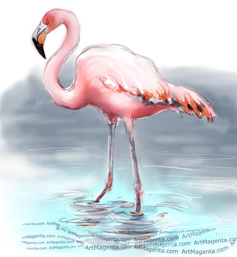 American Flamingo sketch painting. Bird art drawing by illustrator Artmagenta