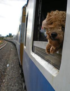 Perros y Gatos, pasajeros de Tren