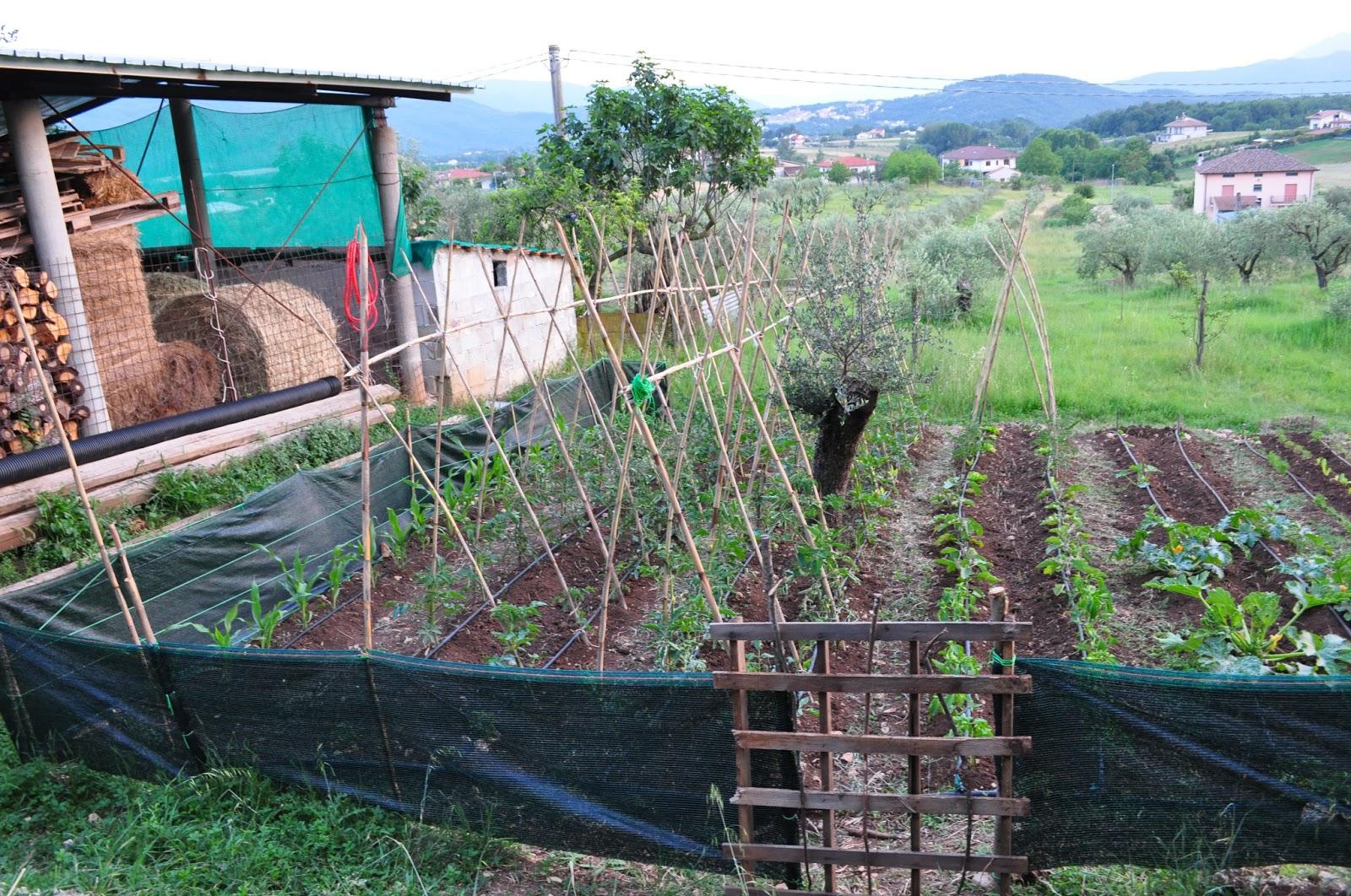 Plantar Tomates En Huerto Interesting Plantas De Tomate Cherry  ~ Como Cultivar Tomates En El Huerto