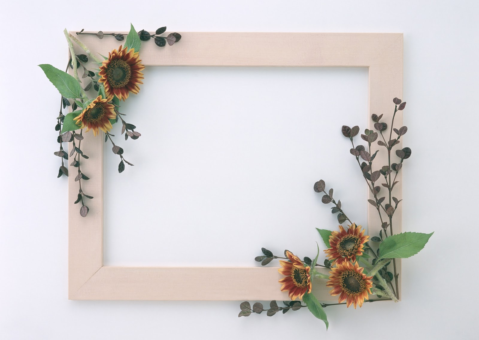 beautiful stylish flowers photo frames