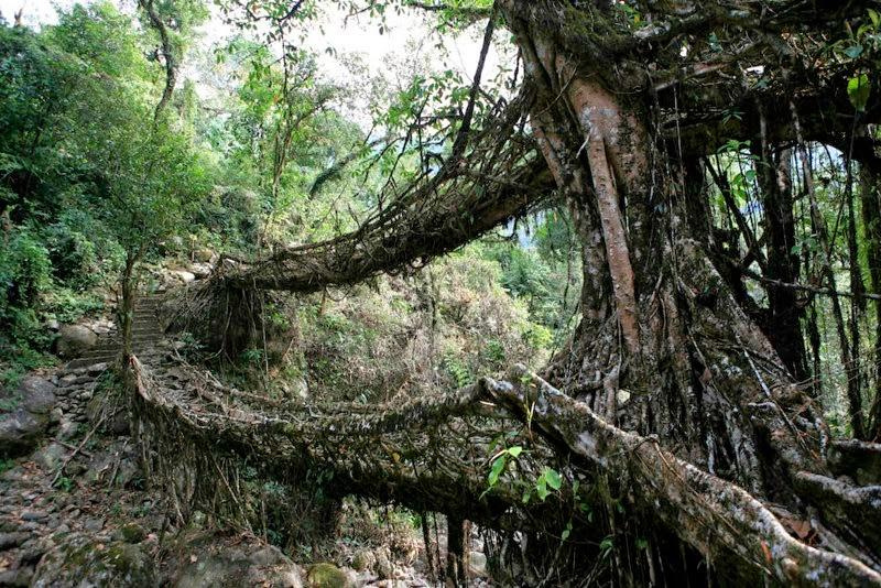 Meghalaya's double-decker Live Root Bridges