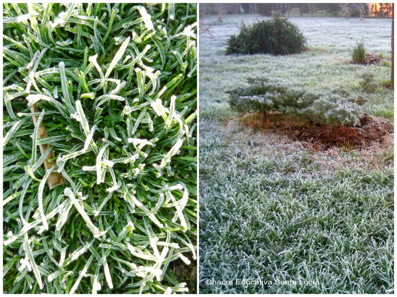 helada - ground frost - Chacra Educativa Santa Lucía