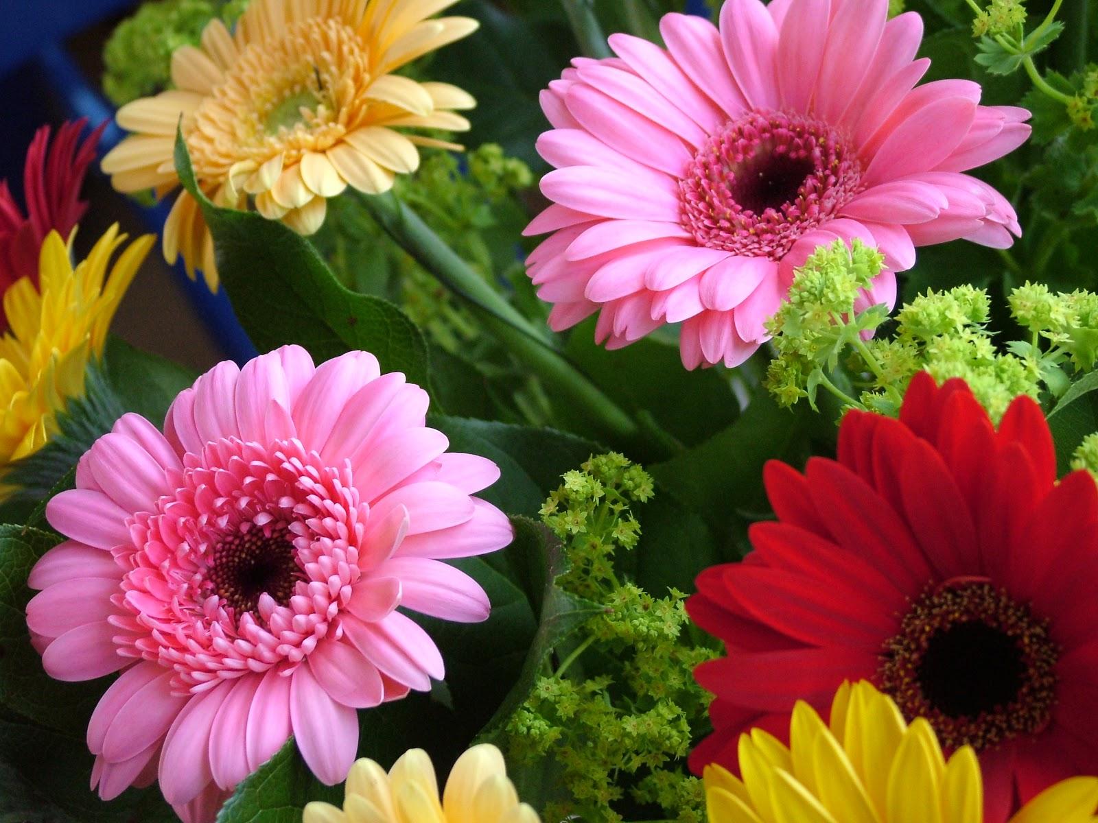 QUEENSBLOG by Queensberry Flower pany Gerbera Week Queensberry April 16