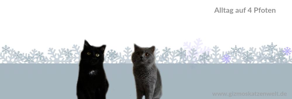 Katzenblog ||  Alltag auf 4 Pfoten