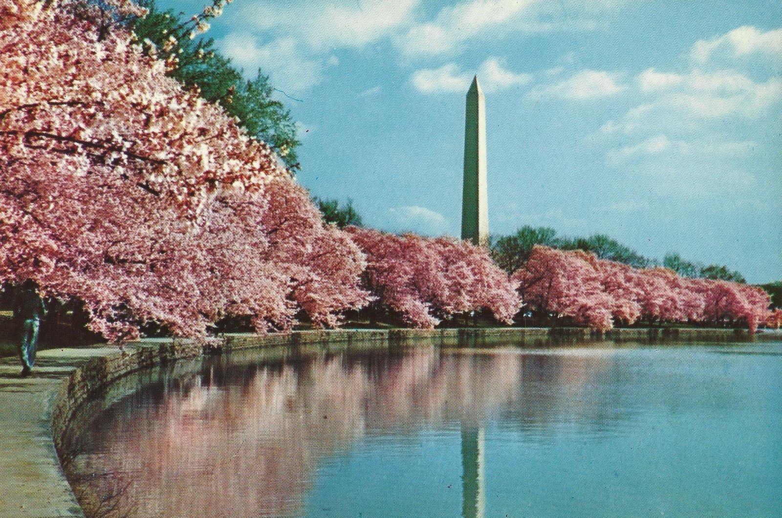 Vintage Travel Postcards Washington Monument