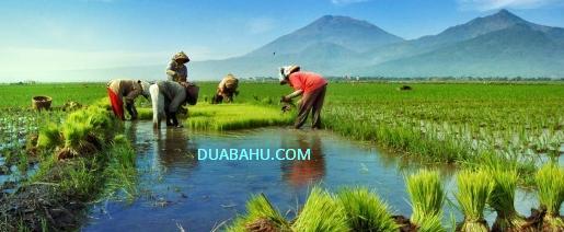 Duabahu.com - Bisnis Online, ECM Key, Fly, Informasi,  Foto dan Gambar