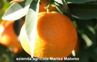 http://www.aziendaagricolaferente.com/INDEX.html