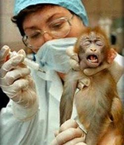 Experimentos em macaco