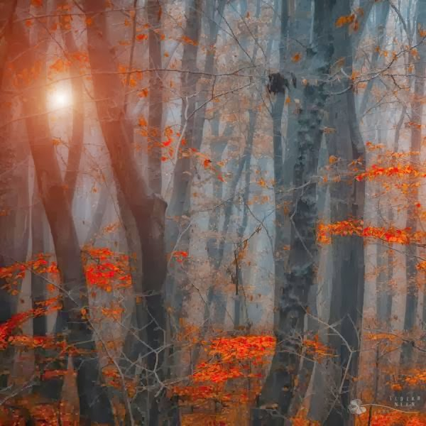 Cute Forest Photography by Ildiko Neer