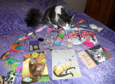 Anakin The Two Legged Cat's First Birthday presents