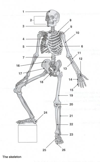 skeletal system assignment