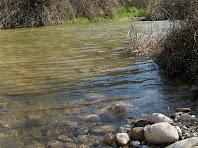 En aquest punt on la llera és força planera, l'aigua transparent permet observar els còdols arrodonits