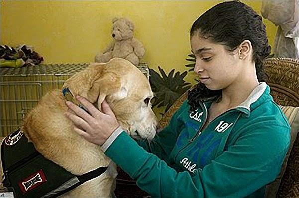 Perros de ayuda a personas con problemas de salud mental.