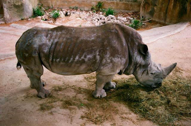 Ogród zoologiczny w Barcelonie