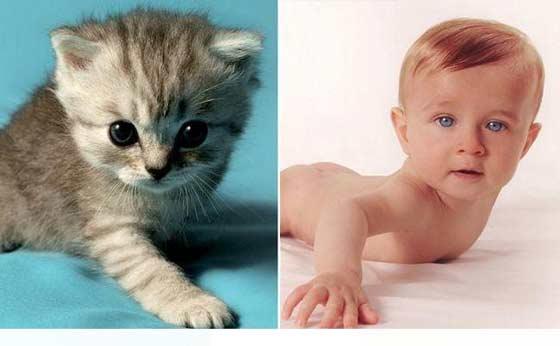 Niños y Gatos Hermosa Combinación
