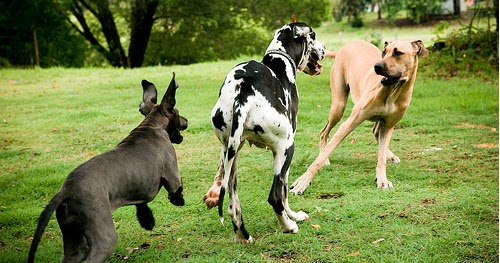 Animals Wallpapers: mo...