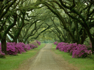 Today i want to pay tribute to trees those majestic plants that often