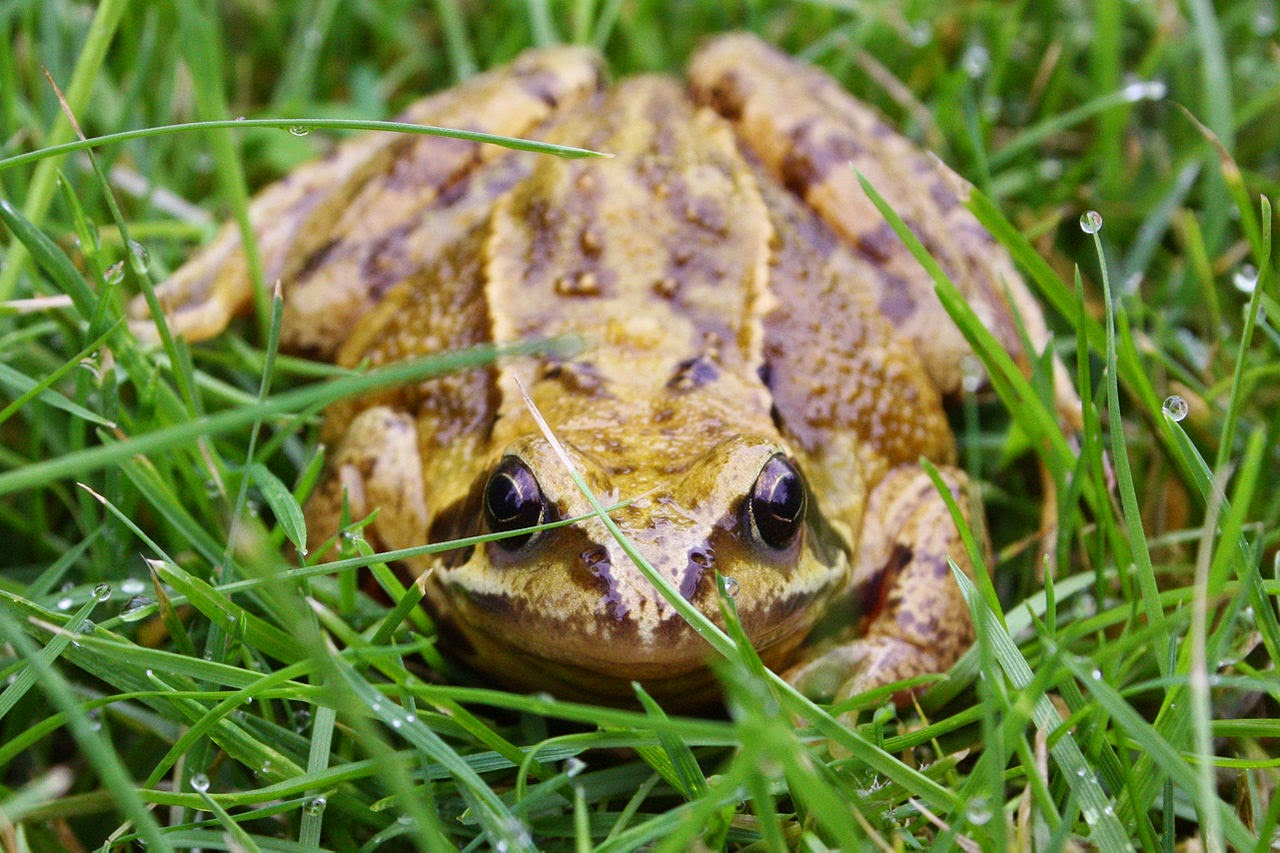 vet blog what threat do frogs and toads pose to dogs