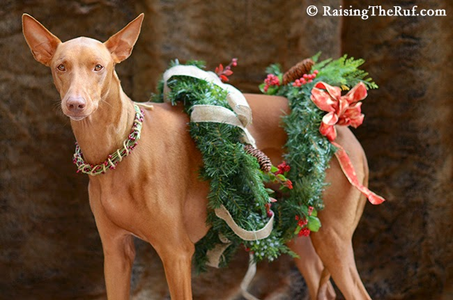 12 Days Of Christmas Dog Rufus