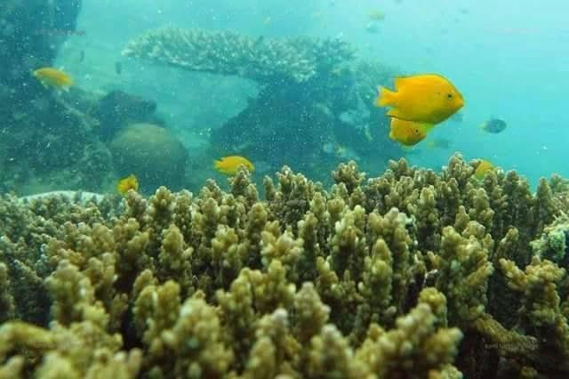 Keindahan surga bawah laut kota pulau kasiak pariaman