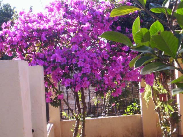 Paisajes y jardines la planta del mes - Azalea cuidados planta ...
