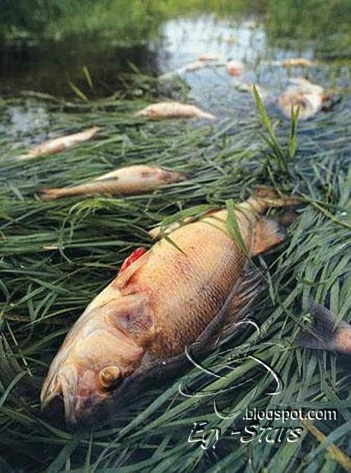 -سمك -مقتول-سبب-الانسان -ظهر-الفساد-في-البر والبحر