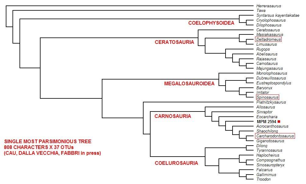 Theropoda come leggere un cladogramma for Come leggere i progetti