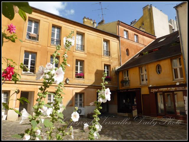 Cour du cheval blanc Versailles roses trémières hollyhocks
