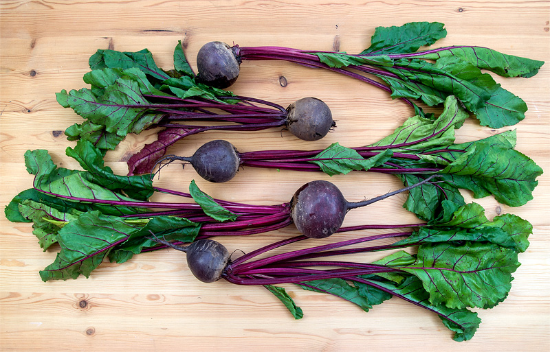 Young beet with leaves top