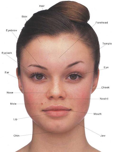 ingilizce başımız,kafamız ve yüzümüzün bölümleri ve organlar
