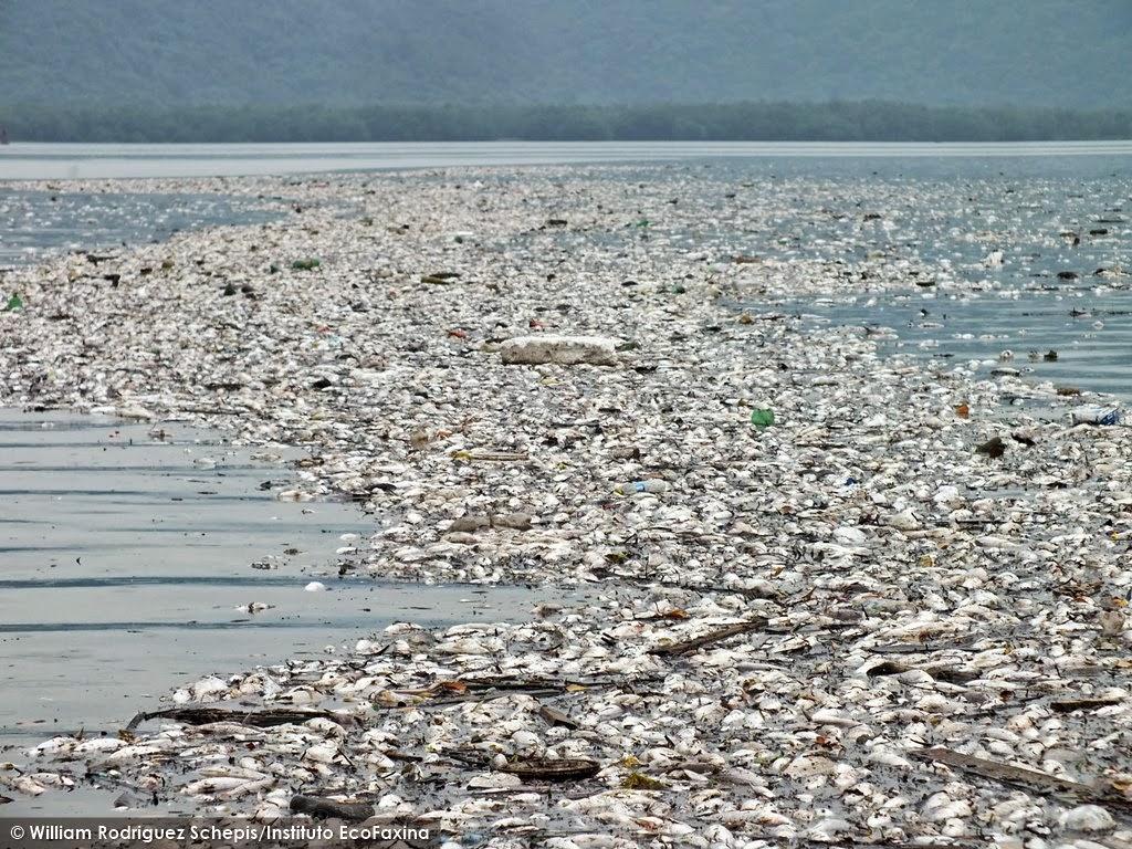 Desastre ecológico: Contaminação causou a morte de milhões de peixes e invertebrados.