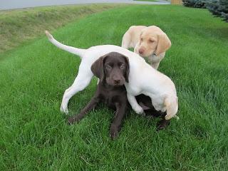Funny Mischievous Puppies