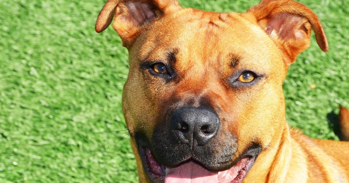 Adopt A Dog Bay Area California