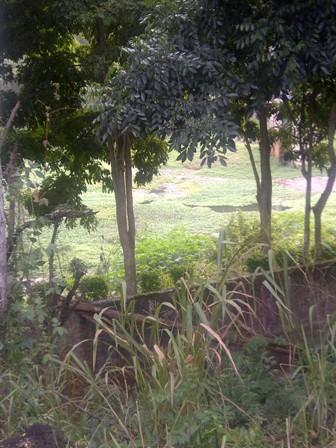 Caraqueños denuncian desidia en mantenimiento del embalse La Mariposa
