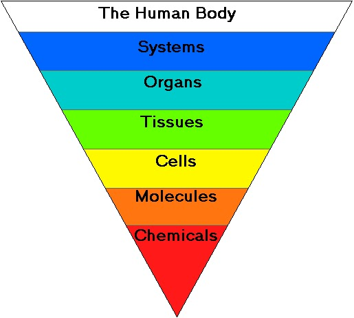 nutritionalfoundations: Organization of the Human Body