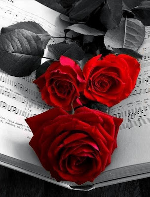 black and white red rose image