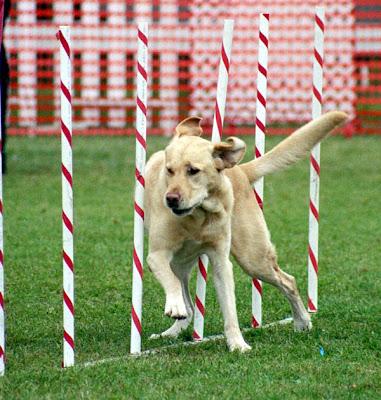 agility-dog-training-tips