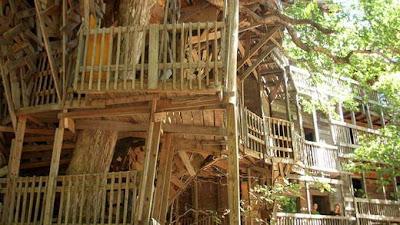 Rumah pohon terbesar dan terindah di dunia