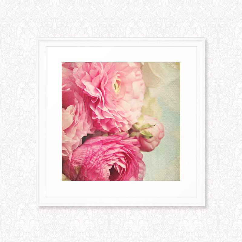 Ranunculus flowers, photograph