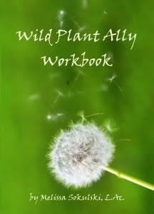 Wild Plant Ally Workbook