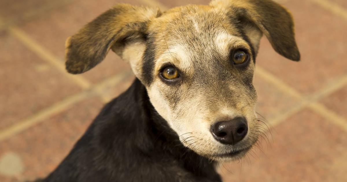 Alimentación y refugio a perros abandonados
