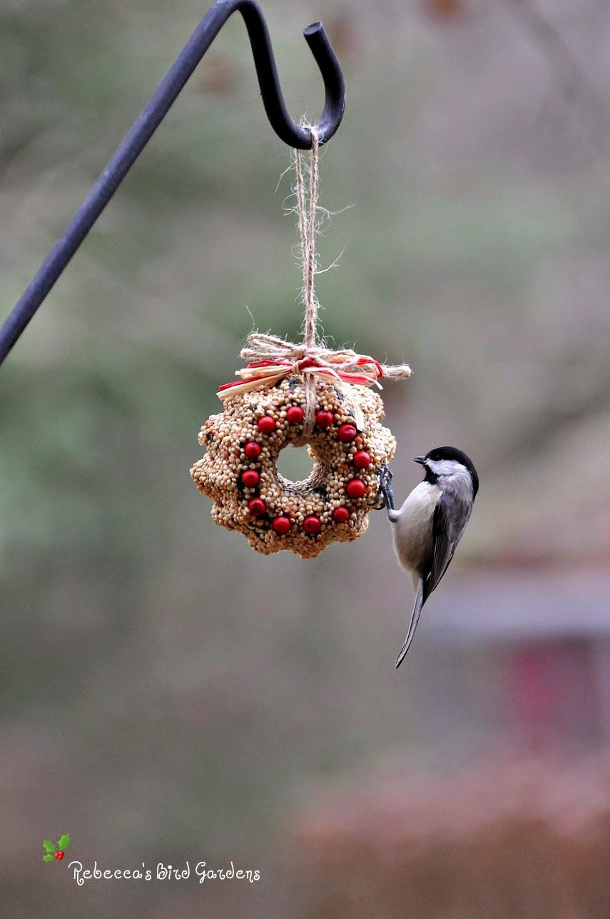 Rebecca 39 s bird gardens blog diy miniature suet and for Bird seed glue recipe