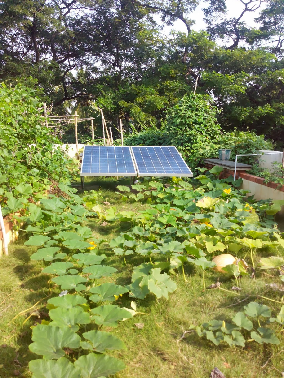 Permaculture in an urban environment a productive terrace for What does terrace farming mean