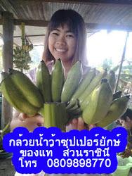กล้วยซุปเปอร์ยักษ์