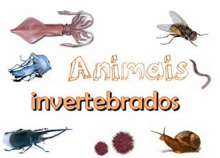 https://dl.dropboxusercontent.com/u/81358399/Leonice%20Kraisch2014/2%C2%BA%20ano/Animais%20vertebrados%20e%20invertebrados/animaisvertebradosinvertebrados.html