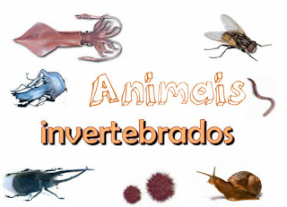 http://www.escolakids.com/invertebrados.htm