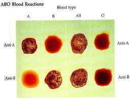 Macam - Macam Golongan darah