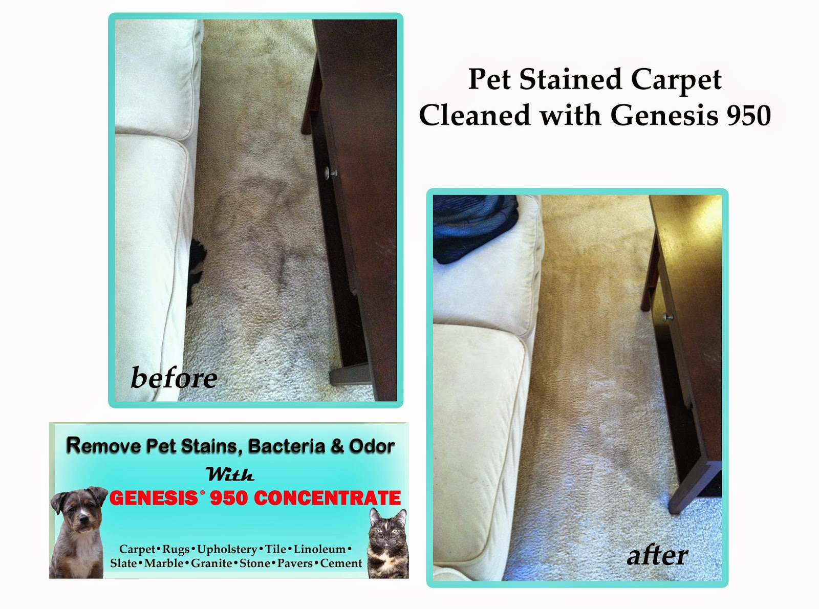 Clean Pet Stains From Carpet